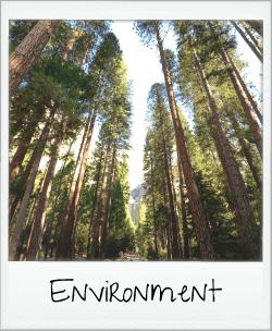 environment - sunshine through trees